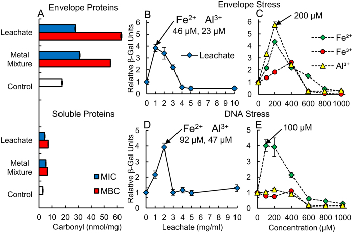 Clay leachates produce high levels of envelope protein oxidation, activating σ E and SOS stress responses. Plots show ( A ) protein carbonyl content (nmol-carbonyl/mg-protein) measured in envelope vs. soluble protein fractions of E. coli reacted with leachates and metal mixtures in MSA media, at MIC and MBC. ( B ) Envelope stress measured by σ E -response from LacZ fusions in leachates compared to ( C ) single metal solutions. ( D ) DNA stress (SOS-response) measured on E. coli reacted with leachates, and ( E ) single metal solutions. LacZ results are normalized to levels measured in control E. coli (Relative β-Gal Units).