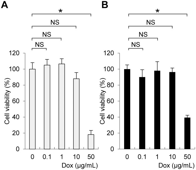 Cytotoxicity of doxycycline to primary cultures of hepatocytes. Hepatocytes were isolated from 9-week-old female wild type ( A ) or Tet-mev-1 mice ( B ) that had been supplied with doxycycline-free water. The cells were subjected to primary culture, treated with the indicated concentrations of doxycycline ( Dox ) for 72 hours, and then examined using cell counting assays. The values are expressed as means ± SD from six samples in each group. The asterisk indicates that the difference is statistically significant between the groups (* p