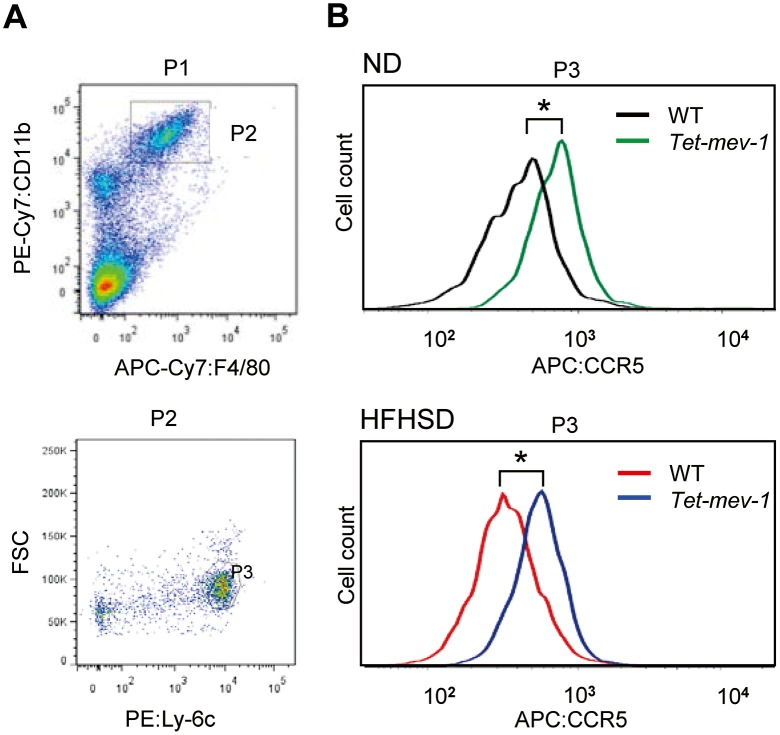 Increased CCR5 expression in peripheral blood monocytes/macrophages of Tet-mev-1 mice. ( A ) Activated monocytes/macrophages were identified as an F4/80 + /CD11b + /Ly-6C high cell fraction ( P3 ) in male wild type ( WT ) and Tet-mev-1 mice that had been supplied with doxycycline-containing water and were subsequently fed a normal diet ( ND ) or high-fat/high-sucrose diet ( HFHSD ) for 4 months. ( B ) CCR5 expression in these cells was analyzed by measuring the intensities of APC fluorescence bound to anti-CCR5 antibodies using five to six mice per group. The asterisks indicate that the differences between the groups are statistically significant (* p