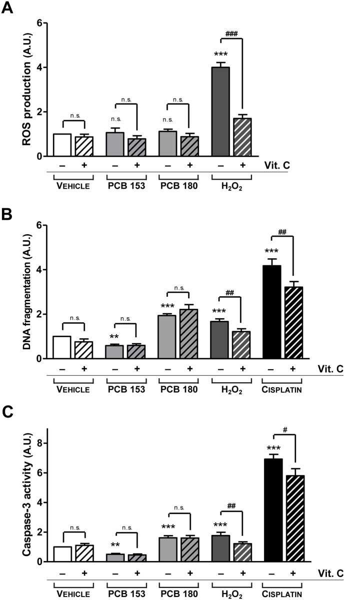 Evaluation of apoptosis induced by ROS production. Quantitative ROS generation was measured using the oxidant-sensitive probe dichlorofluorescein (H2DCF-DA) assay (A), apoptosis was evaluated by ELISA DNA fragmentation assay (B), and caspase-3 activity was determined by fluorimetric assay (C), as described in the Materials and Methods. Pituitary primary cells were treated as described in the study design. 10 μM Hydrogen Peroxide (H 2 O 2 ) (A), 50 μM H 2 O 2 (B, C), or 32 μM Cisplatin (B,C) were used as positive controls. In all the assays, 1 mM Ascorbic Acid (vitamin C) was used as an antioxidant. ROS production was not influenced by non-dioxin-like PCB 180 or PCB 153, with or without the addition of vitamin C (A). Moreover, vitamin C had no effect on either apoptosis or caspase-3 activity of PCBs-treated pituitary cells (B, C), suggesting that ROS do not play a key role in PCBs-mediated apoptosis mechanism. Results represent the mean ± SD of five independent experiments, each performed in quadruplicate and expressed as arbitrary units (A.U.). The value of 1 was assigned to ROS production (A), DNA fragmentation (B) or caspase-3 activity (C) from vehicle-exposed cells. **, p