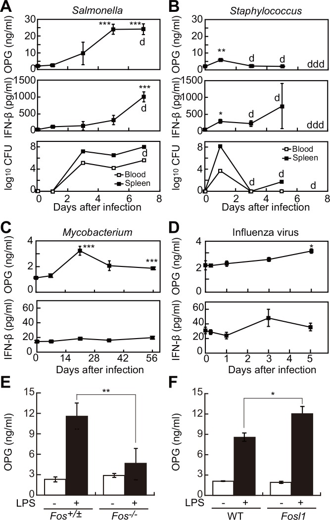 """Increased serum <t>OPG</t> levels in mice after microbial infection occurs via Fos family transcription factors. (A, B) Time-dependent elevation of OPG and <t>IFN-β</t> in serum, and colony forming units (CFU) in blood and spleen of 6-week-old C57BL/6J mice infected with Salmonella enterica χ3306 (A, n = 4 each point) or Staphylococcus aureus 92–1191 (B, n = 4 each point). """"d"""" indicates death of one mouse. """"ddd"""" indicates death of three mice. (C, D) Time-dependent elevation of OPG and IFN-β levels in serum after Mycobacterium (C, n = 4 each point) and influenza virus (D, n = 3 each point) infection of 6-week-old C57BL/6J mice. * P"""