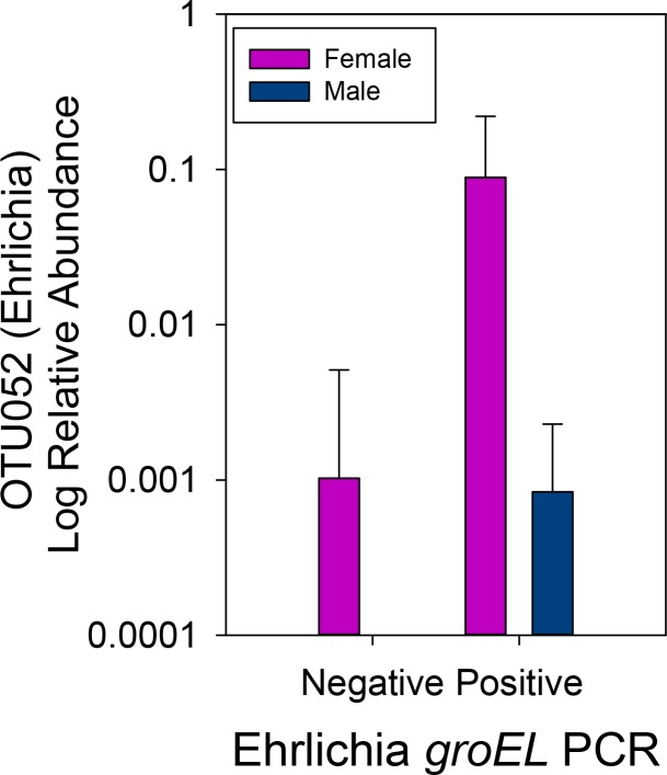 Female ticks had significantly higher relative abundance of Ehrlichia compared to males. The relative abundance of Ehrlichia (OTU052) in the 16S rRNA gene libraries was significantly higher in females compared to males (ANOVA F = 3.587, P = 0.064).