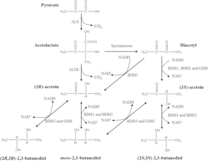 2,3-Butanediol biosynthesis pathway and mechanism of 2,3-butanediol stereoisomer formation in Serratia sp. T241. ALS (acetolactate synthase), ALDC (acetolactate decarboxylase), BDH1 ( meso -2,3-butanediol dehydrogenase), BDH2, ((2 S ,3 S )-2,3-butanediol dehydrogenase), BDH3 ((2 R ,3 R )-2,3-butanediol dehydrogenase), GDH (glycerol dehydrogenase).