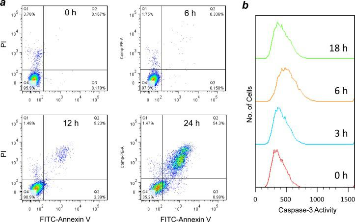 Induction of apoptosis of H1299 cells by peptide 49 . (a) Flow cytometry analysis of H1299 cells after treatment with 10 μM peptide 49 for varying periods of time (0–24 h) and stained with <t>FITC-annexin</t> V and propidium iodide (PI). The percentage of cells in each quartile is indicated. (b) Activation of <t>caspase-3</t> activity in H1299 cells by peptide 49 (20 μM) as monitored by anticaspase-3 immunostaining and flow cytometry.