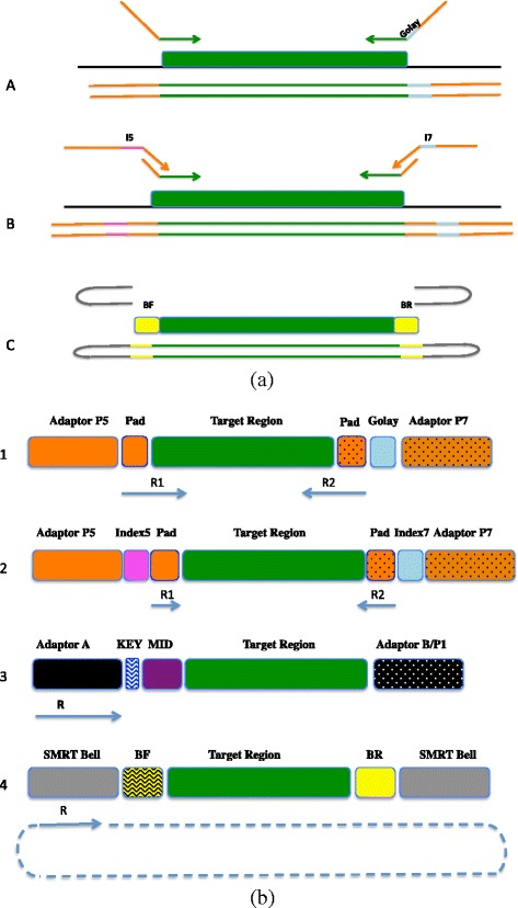 Experimental design. ( a ) Design of single and dual-index sequencing strategy and schematic describing the 3 amplicon designs: Fusion Primer Design (A) is a one step PCR which uses a single 12-nt error-correcting Golay index sequence (blue) allowing a high multiplexing capability. Tag tailed design (B) is a 2-step PCR which uses a universal primer for the first step and a dual index barcoded primer set in the second step. Standard Illumina Nextera 8-nt index sequences were used (pink Index 5; blue Index 7). The Pac Bio Ligate Adapters design (C): Two harpin adapters (grey) were ligated to a barcoded template (BF forward barcode; BR reverse barcode) to allow multiplexing. ( b ) Platform Specific Amplicon Libraries: Illumina paired-end sequencing (1,2) generates 2 sequencing reads (R1 and R2) per each cluster and can have single (Standard/Golay) or dual indexes (I5, I7). Ion Torrent and 454 (3) have a single read for each bead with a single index (MID). Pacific Bioscience generate a single circular read for each molecule (SMRT bell) and can have one (BF or BR) or two indexes. The starting point and direction of sequencing reads are indicated by a solid blue line and arrows, respectively. In the case of Fusion Primer Design custom sequencing primer were used