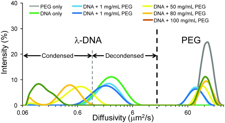 Dynamic light scattering measurements of in vitro λ-DNA solutions of varying condensation state. Measurements of PEG 6000 (gray) and λ-DNA (green) alone indicate their location within the combined solutions. As we increase PEG concentration, initially we see a negligible effect on the λ-DNA diffusivity distribution (shades of blue). At 50 mg/mL, the solution is above a threshold concentration of PEG 6000 and we observe a reduction in the λ-DNA diffusivity distribution, including a sharp decrease beyond the overlap concentration for PEG 6000 at 100 mg/mL (shades of yellow-orange). The initial reduction stems from the polymer-and-salt-induced (psi or ψ) condensation by macromolecular crowding-induced depletion forces. We show the regime over which λ-DNA is condensed and decondensed along with the location of the PEG population. Distributions are derived from 10–15 runs per individual measurements and averages of several measurements.
