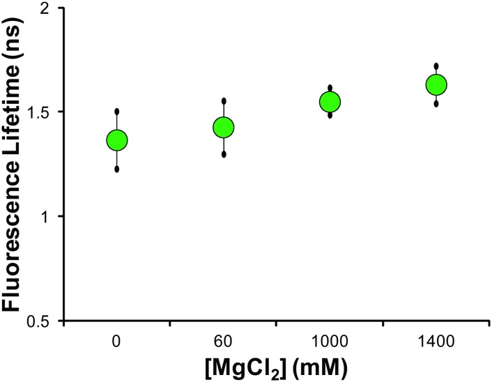 Fluorescence lifetime measurements of in vitro λ-DNA solutions of varying ionic strength solutions. The mean fluorescence lifetime of solutions of λ-DNA with varying concentration of MgCl 2 shows no statistical dependence on ionic strength. Across a wide distribution of salt concentration varying over three orders of magnitude we see no statistically significant effect on the mean fluorescence lifetime, indicating it is not strongly influenced by salt concentration. Statistical comparisons made by Student's t-test, with no statistical difference between solutions.