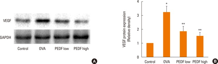 PEDF ameliorates the expression of VEGF protein in lung tissue in chronic experimental asthma. (A) Total protein from lung tissue was extracted 24 hours after the final OVA challenge and subjected to Western blot analysis of VEGF. GAPDH was utilized as the standard control. (B) The band signal strength of VEGF expressed as a ratio to GAPDH. Data are presented as means±SEM (n=8 per group). * P
