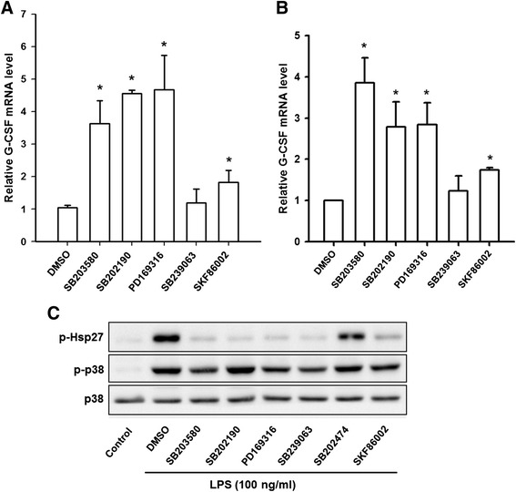 Effects of various p38 MAPK inhibitors on LPS-induced G-CSF mRNA in RAW264.7 and THP-1 macrophages. RAW264.7 cells ( a ) and THP-1 ( b ) were pretreated for 30 min with DMSO or 10 μM SB203580, SB202190, PD169316, SB239063, or SKF86002, then 100 ng/ml of LPS was added and incubation continued for 6 h, then the G-CSF mRNA levels were determined by RT-qPCR, normalized to GAPDH mRNA levels, and expressed relative to the value in the DMSO control, set as 1. The values are the mean ± SD for three separate experiments. * p