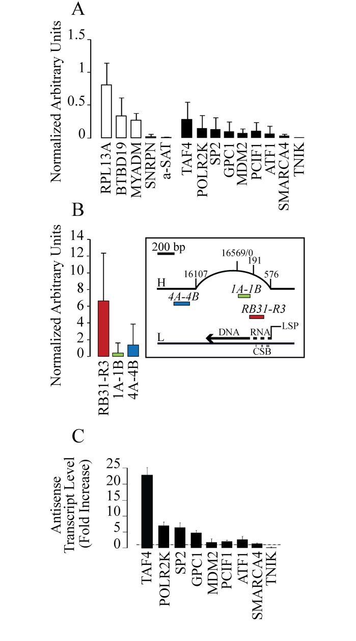 R-loop formation at the studied genomic and mitochondrial regions in untreated control N-TERA-2 cells. DNA enrichment of each sample is subtracted of the enrichment value of the same sample treated with <t>RNase</t> H1 before DRIVE precipitation. Then the enrichment value is normalized against the 2-min CPT sample (see Fig 2 ) of the RPL13A amplicon of the same experiment. Values are means ±SEM of two to four independent experiments. The data show a higher SEM than commonly published as we report median values of several experiments and not a single representative one. (A) DRIVE assay was performed to determine R-loop levels downstream TSS (white bars) and upstream TSS (black bars). Three negative loci for R-loop formation are also reported (SNRPN, a-SAT, TNIK). (B) Mitochondrial DNA was analyzed with DRIVE assay. Three regions of interest were selected: red for the r-loop forming region (RB31-R3), green for the D-loop region (1A-1B) and blue for the non-D-loop region (4A-4B). Map on the right of the panel shows the heavy (H) and the light (L) strands of mitochondrial DNA, with the three Conserved Sequence Blocks (CSB) and the studied regions (in red, green and blue respectively). (C) Antisense transcription after CPT treatment in N-TERA-2 cells. Promoter-associated antisense transcripts were evaluated by rtqPCR after 4 hours CPT treatment at 10 μM. PCR determinations were normalized to cytochrome b mRNA and to untreated cells (dotted line). Values are means +/− SEM of two determinations from at least two independent experiments.