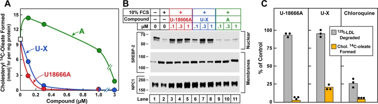 Cholesterol esterification, sterol regulatory element-binding protein (SREBP) 2 processing, and 125 I-LDL (low density lipoprotein) degradation in Chinese Hamster Ovary (CHO) 7 cells. On day 0, CHO-7 cells were set up for experiments in medium A with 5% lipoprotein-deficient serum (LPDS) at a density of 2.5 x 10 5 cells/60-mm dish. On day 2, the medium was switched to fresh medium containing 5 µM sodium compactin and 50 µM sodium mevalonate. On day 3, the medium was switched to medium B containing either 10% LPDS or 10% fetal calf serum (FCS), 50 µM compactin, 50 µM mevalonate, and various concentrations of the indicated compound and then incubated for either 7 hr ( A ) or 6 hr ( B ) as described below. ( A ) Cholesterol esterification. After a 5 hr incubation with the above medium with 10% FCS and the indicated compounds, each cell monolayer was labeled for 2 hr with 0.2 mM sodium [ 14 C]oleate (8133 dpm/nmol). The cells were then harvested for measurement of their content of cholesteryl [ 14 C]oleate and [ 14 C]triglycerides. Each value is the average of duplicate incubations. Values for [ 14 C]triglyceride content in cells treated with 1 µM of U18666A, compound A , and U-X were 117, 116, and 106 nmol/hr/ mg protein, respectively. (B) SREBP-2 processing. After a 5 hr incubation with the above medium containing either 10% LPDS (lane 1) or 10% FCS (lanes 2–11), each monolayer received a direct addition of 20 µg/ml of N-acetyl-leu-leu-norleucinal (A.G. Scientific, San Diego, CA). After 1 hr, cells were harvested and fractionated into a nuclear extract and 10 5 g membrane fraction ( Sakai et al., 1996 ). Aliquots (30 and 10 μg protein for SREBP-2 and Niemann-Pick C1 [NPC1], respectively) were subjected to sodium dodecyl sulfate polyacrylamide gel electrophoresis (SDS-PAGE). Immunoblot analysis and image scanning were carried out with monoclonal antibodies directed against SREBP-2 or NPC1 as described in Materials and methods. ( C ) 125 I-LDL degradation. On day 3, the