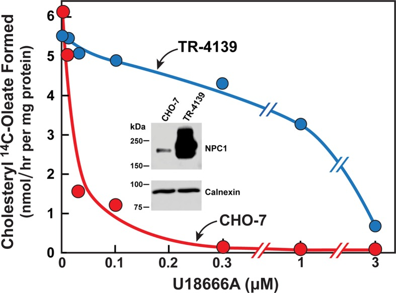 Cholesterol esterification in Chinese Hamster Ovary (CHO) 7 and TR-4139 cells that overexpress Niemann-Pick C1 (NPC1). CHO-7 cells and TR-4139 cells were set up for experiments in medium A with 5% lipoprotein-deficient serum (LPDS) as described in the legend to Figure 3 . On day 2, the medium was switched to fresh medium containing 5 µM sodium compactin, 50 µM sodium mevalonate, and the indicated concentration of U18666A. After incubation for 4 hr, each cell monolayer was labeled for 2 hr with 0.2 mM sodium [ 14 C]oleate (11,662 dpm/nmol). The cells were then harvested for measurement of their content of cholesteryl [ 14 C]oleate and [ 14 C]triglycerides. Each value is the average of duplicate incubations. The cellular content of [ 14 C]triglycerides in CHO-7 and TR-4139 cells was 38 and 40 nmol/hr/mg protein, respectively. Inset shows immunoblots of sodium dodecyl sulfate polyacrylamide gel electrophoresis (SDS-PAGE) gels of whole cell extracts (30 µg) from the indicated cell line incubated with 0.5 µg/ml anti-NPC1 or 1 µg/ml anti-calnexin as described in Materials and methods. DOI: http://dx.doi.org/10.7554/eLife.12177.006