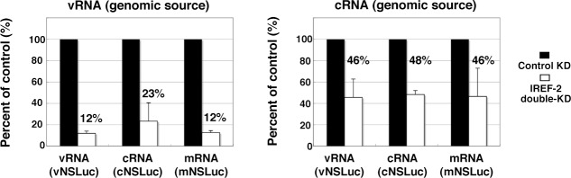 Effect of influenza virus replication factor-2 (IREF-2) on viral reporter RNA syntheses from a reconstituted model replicon. HEK293T of control and IREF-2 knockdown (KD) cells (approximately, 3 × 10 5 cells in a 22-mm-diameter dish) were transfected with expression plasmids pCAGGS-PB1, -PB2, -PA, and -NP (15 ng each). In addition, 1.5 ng of either phPolI-vNS-Luc (for expression of vNS-Luc; left panel ) or phPolI-cNS-Luc (for expression of cNS-Luc; right panel ) was co-transfected as a viral genomic source. At 24 hr post co-transfection, viral reporter levels in both the control KD and the IREF-2 KD cells were quantitatively determined by RT-qPCR as described previously ( Kawaguchi et al., 2011 ) and in 'Materials and methods'. Quantification and standard deviations of the viral reporter RNA levels from IREF-2 KD cells expressed as a percentage of the value from the control KD cells. Each experiment was repeated three times. DOI: http://dx.doi.org/10.7554/eLife.08939.011