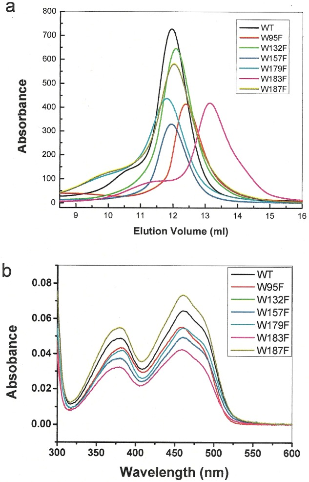 Oligomerization state and absorption spectra of the WT and tryptophan mutants of Erv1 ( a ) Gel filtration chromatography profiles of the WT (black line) and six tryptphan mutants (as indicated) on a Superdex 200 column. ( b ) UV-visible spectra of the WT and tryptophan mutants.