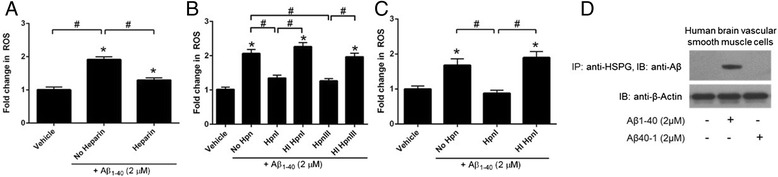 Pharmacological knockdown of HSPG mitigates Aβ 1-40 -induced mitochondrial and cytosolic ROS production in VSMC. Primary human cerebral VSMC were pre-treated with heparin (15 U/mL), heparinase I (HpnI; 5 Sigma U/mL), or heparinase III (HpnIII; 2 Sigma U/mL) for 2 h, washed, loaded with Mitotracker Red CM-H 2 XRos (MTR; 5 μM; panels a , b ) or the cytosolic superoxide-sensitive dye dihydroethidium (10 μM; panel c ), washed, and treated with Aβ 1-40 . In some cases, cells were pre-treated with heat-inactivated (HI) enzyme (at the same concentration of active enzyme) and washed prior to MTR loading and Aβ treatment. Fluorescence was measured after 30 minutes. To determine if HSPG directly interact with Aβ 1-40, human VSMC cells were treated with Aβ 1-40 for 30 minutes and cell lysates were immunoprecipitated with anti-HSPG antibody and immunoblotted with anti-Aβ antibody (Panel d ). Results are representative of 3 independent experiments performed in triplicate. *p