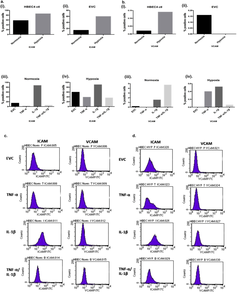 Adhesion molecule expression is altered due to chromic inflammatory and hypoxia exposure. Cell surface staining of ( a ) ICAM-1, ( b ) VCAM-1 by FACS on (i) HBEC4 ctl, (ii) EVC clones, (iii) normoxia clones and (iv) hypoxia clones and representative flow cytometry plots for ( c ) Normoxia and ( d ) Hypoxia. Cells were continuously cultured for a period of three months. Values based on a dot blot analysis using percentage-gated values. Isogenic controls were used for each individual sample and this value was subtracted from each sample value. (20,000 events counted, n = 1).
