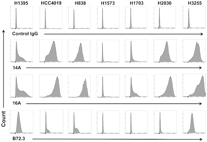 A glycopeptide epitope on lung cancer cell surface is preferably recognized by mAb 16A. Lung adenocarcinoma cell lines, NCI-H1395, HCC4019, H838, H1573, H1703, H2030, and H3255 were studied by flow cytometry staining. Monoclonal antibodies 14A, which binds to MUC1 peptide part only (RPAPGSTAPPAHG); 16A, which binds to MUC1 glycopeptide RPAPGS(GalNAc)TAPPAHG; and B72.3, which binds to sugars only (clustered Tn antigen), were used as primary antibodies. Goat anti-mouse IgG (Allophycocyanin-conjugated), and mouse IgG isotype control were from Southern Biotech (Birmingham, AL, USA).