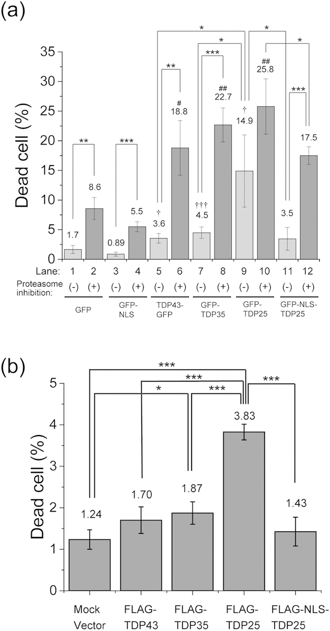 Comparison of the death rate among the Neuro2A cells expressing TDP43 and the carboxyl-terminal fragments (CTFs) with and without treatment with a proteasome inhibitor. Dead cell rate of Neuro2A cells expressing proteins tagged with GFP ( a ) or FLAG ( b ). The error bars indicate mean and SD (n = 3). Significance was assessed by Student's t test. Significance compared to GFP as a negative control without proteasome inhibition is marked as † p