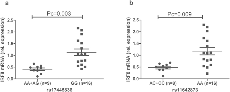 The influence of rs17445836 and rs11642873 on the relative expression of IRF8. The expression of IRF8 in PBMCs treated with anti-CD3/28 antibodies. PBMCs were obtained from healthy individuals with diverse genotypes of rs17445836 ( a ) and rs11642873 ( b ). Data show the mean ± SD. Pc: Bonferroni corrected p value, multiplied by 3.