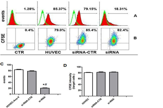 Down-regulation of Anx-V in HUVECs has little effect on the MSC-MV internalization. (A) Anx-V siRNAs were transfected into HUVECs and the Anx-V expression was assessed by flow cytometry. The hollow diagrams represent the control and the solid ones represent the Anx-V-FITC fluorescence intensities of the indicated cells. (B) HUVECs, Anx-V siRNA-transfected HUVECs (siRNA) and control siRNA-transfected HUVECs (siRNA-CTR) were maintained in culture for 12 hours in the presence of CFSE-labeled MSC-MVs. The cells were harvested for flow cytometric analysis. (C) The t-test shows that the Anx-V expression was significantly decreased by si-RNA ( vs .CTR *P