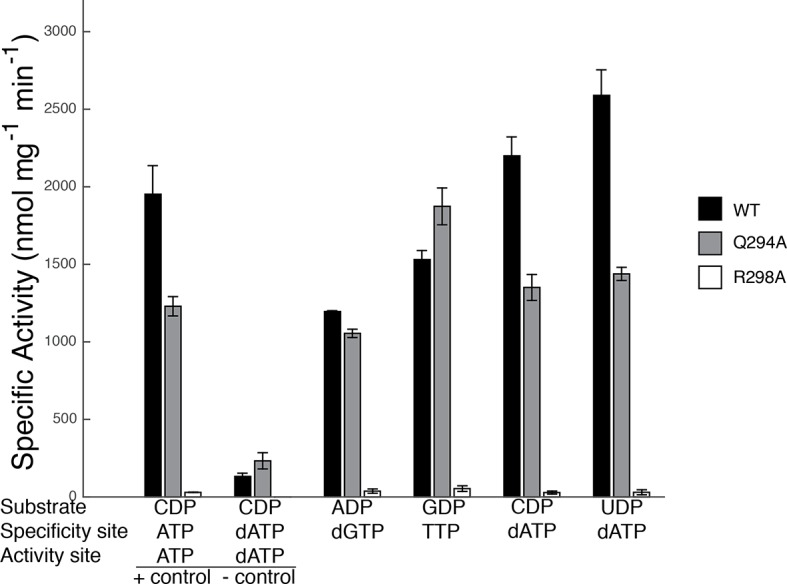 Specific activity for wild-type and mutant forms of E. coli RNR in the presence of different substrate/effector pairs. Wild-type is shown in black, Gln294Ala in grey, and Arg298Ala in white. Activity was measured by a coupled assay that follows nicotinamide adenine dinucleotide phosphate (NAPDH ) consumption (see Materials and methods) for the following substrate and effector concentrations: 1 mM CDP and 3 mM ATP (far left), 1 mM CDP and 175 μM dATP (second to left), 1 mM ADP and 120 μM dGTP, 1 mM GDP and 250 μM TTP, and 1 mM CDP/UDP and 1 μM dATP (far right). Since dATP at high concentrations (175 μM) inhibits the enzyme, the sets of bars at the far left represent control experiments to show activity levels under active (CDP/ATP) and inactive (CDP/dATP) conditions. DOI: http://dx.doi.org/10.7554/eLife.07141.015
