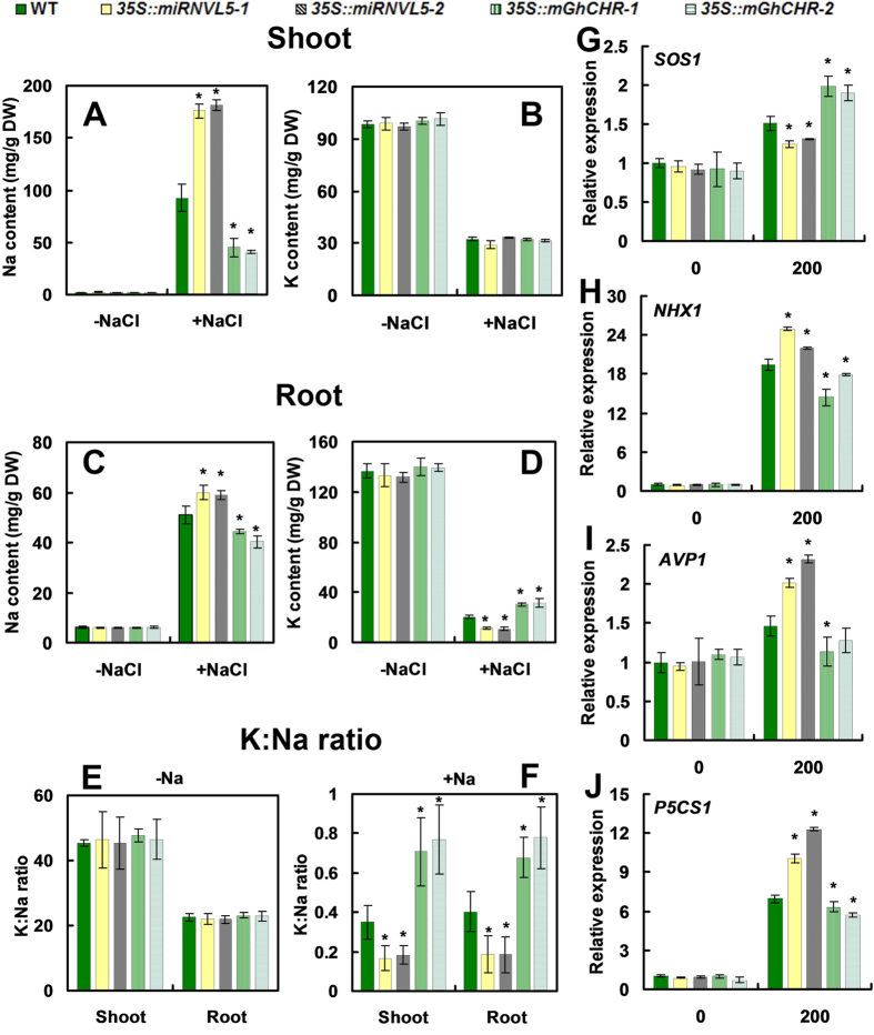 Sodium (Na + )/potassium (K + ) accumulation and expression of SOS1 , NHX1 , AVP1 and P5CS1 in transgenic and wild-type (WT) plants exposed to NaCl. ( A,C ) Na + in shoots and roots. ( B,D ) K + in shoots and roots of three week-old WT, 35S::miRNVLU5 and 35S::mGhCHR transgenic plants exposed to 200 mM NaCl exposure for 3 d. ( E,F ) K + /Na + ratio in WT and the transgenic plants under −NaCl ( E , F ) and +NaCl ( F ) Condition. ( G – J ) qRT-PCR analysis of the indicated gene expression. Three week-old seedlings were exposed to 200 mM NaCl for 1 h. Vertical bars represent SD of the mean with three replicates. Asterisks indicate that mean values are significantly different between the transgenic plants and WT ( p