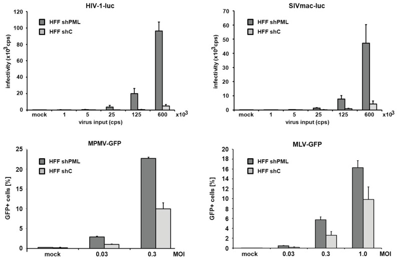 PML blocks the infection of diverse retroviruses. HFF shPML and shC cells were infected in triplicates with increasing amounts of VSV-G pseudotyped reporter viruses or medium (mock). Cells were inoculated with increasing amounts (counts per second; cps) of HIV luciferase-encoding (HIV-luc) or SIV luciferase encoding (SIVluc) reporter virus. Infectivity was determined 72 h postinfection by a luciferase assay and is depicted as counts per second (cps). For MPMV-GFP and MLV-GFP infections, HFF shPML and shC cells were infected with increasing MOI (multiplicity of infection) of VSV-G pseudotyped GFP reporter viruses. Infectivity was determined 72 h postinfection by flow cytometry. Error bars indicate the standard deviation of triplicate infections. The results shown are representative of three independent experiments.