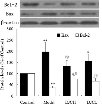 Western blot analysis of pancreatic levels of Bax and Bcl-2. Total protein were extracted from pancreas and subjected to western blot analysis. Levels of Bax and Bcl-2 protein were normalized to that of β-actin. Data were presented as percentage of that in Control group (Mean ± SD, n = 5). ** P