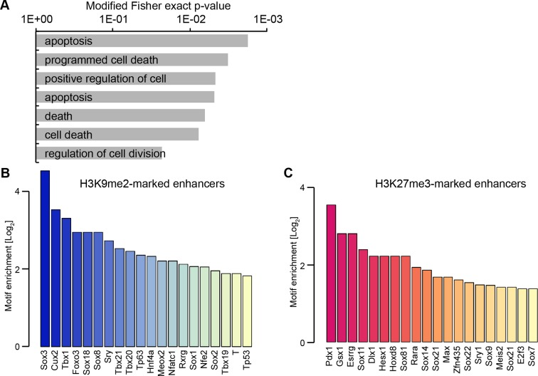 H3K9me2 enriched enhancers are preferentially linked to the p53 pathway. ( A ) Selected enriched GO terms in H3K9me2-marked enhancers. ( B,C ) Bar plots showing top 20 enriched motifs in H3K9me2- ( B ) or H3K27me3- ( C ) marked enhancers. Source data file legends DOI: http://dx.doi.org/10.7554/eLife.09571.029