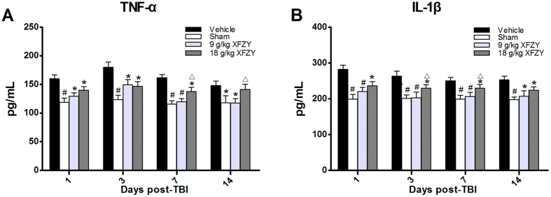 Assay of pro-inflammatory cytokine levels in brain tissue. ( A ) The levels of TNF-α in brain lysates from each group. The TNF-α levels were significantly increased in the Vehicle group compared with the Sham group from the 1 st to the 14 th day post-injury, whereas treatment with 9 g/kg XFZY significantly reduced the increase in TNF-α compared with the Vehicle group on the 1 st , 3 rd , 7 th and 14 th days. Treatment with 18 g/kg XFZY significantly reduced the increase in TNF-α levels compared with the Vehicle group on the 1 st , 3 rd and 7 th days (n = 8/group). On the 7 th and 14 th days, the levels of TNF-α in the 9 g/kg XFZY group were significantly lower than those in the 18 g/kg XFZY group. ( B ) The levels of IL-1β in brain lysates in each group. The contents of IL-1β were significantly increased in the Vehicle group compared with the Sham group from the 1 st to the 14 th day post-injury. Treatment with 9 g/kg XFZY significantly reduced the increased levels of IL-1β compared with the Vehicle group on the 1 st , 3 rd , 7 th , and 14 th days. Treatment with 18 g/kg XFZY significantly reduced the increased levels of IL-1β compared with the Vehicle group on the 1 st , 3 rd , 7 th , and 14 th days. On the 3 rd and 7 th days, treatment with 9 g/kg XFZY significantly reduced the levels of IL-1β in the ipsilateral brain tissue compared with treatment with 18 g/kg XFZY (n = 8/group). All of the data were analyzed by two-way ANOVA and are presented as the mean ± SEM. *p