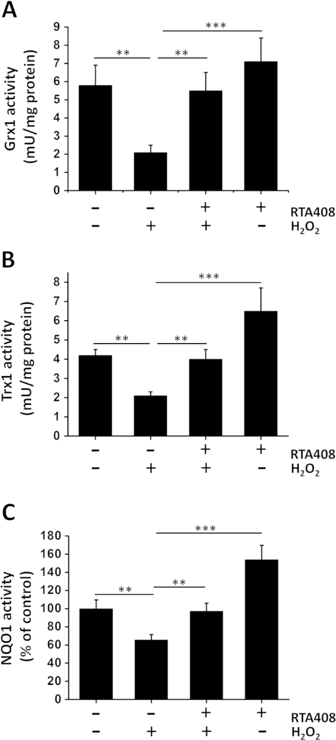 Effects of RTA 408 on Grx1, Trx1, and NQO1 enzyme activities . RPE cells were pretreated with 100 nM RTA 408 for 24 h followed by 200 μM H 2 O 2 for another 6 h. Quantitative analysis of Grx1 (A), Trx1 (B), and (C) NQO1 activity of all treatment groups (control, H 2 O 2 -treated, RTA 408 and H 2 O 2 -treated, and 100 nM RTA 408 only RPE cells) are depicted as mean±SD, ** P