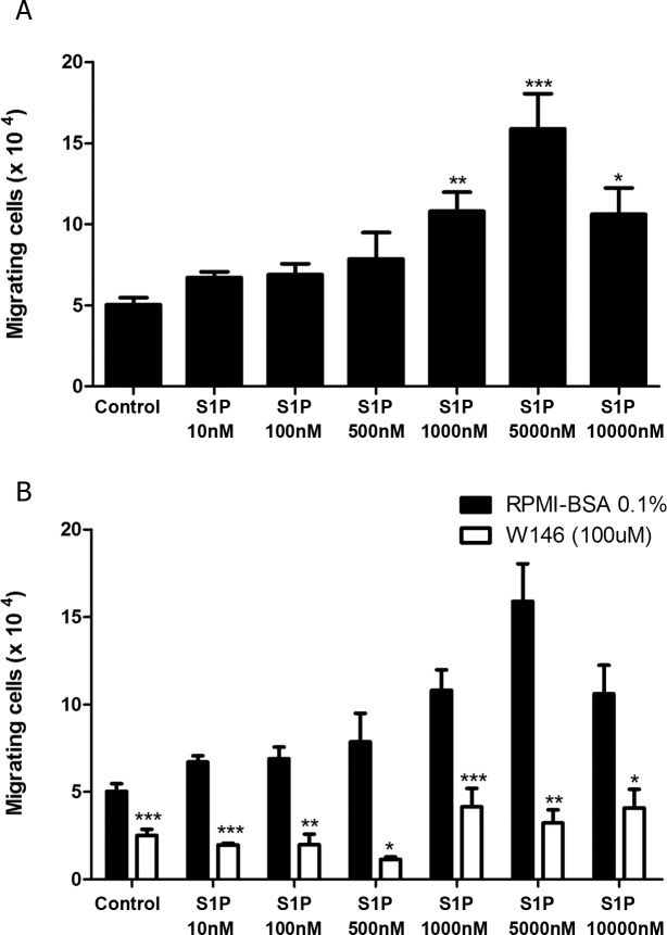 High S1P concentrations induce S1P1-dependent fugetaxis of CEM cells. (A) CEM cells were serum-starved for 2 h, applied to Transwell™ chambers containing different S1P concentrations and incubated for 4 hours. S1P was added to the upper chamber to evaluate fugetaxis; only RPMI-BSA 0.1% was added to the bottom chambers. Results were analyzed by One-way ANOVA, followed by Tukey post-test (n = 3). (B) CEM cells were serum-starved for 2 h and pre-treated or not with W146 (100 μM). Cells were then applied to Transwell™ chambers containing different S1P concentrations and incubated for 4 hours. S1P was added to the upper chamber to evaluate repulsive responses. Black bars correspond to T-ALL blasts pre-treated with RPMI-BSA 0.1% alone and white bars correspond to T-ALL blasts pre-treated with W146. Results were analyzed by unpaired Student's t test. Results are expressed as mean ± SEM and differences were considered statistically significant when * p˂0.05, ** p ˂0.01 or *** p ˂0.001 (n = 3).