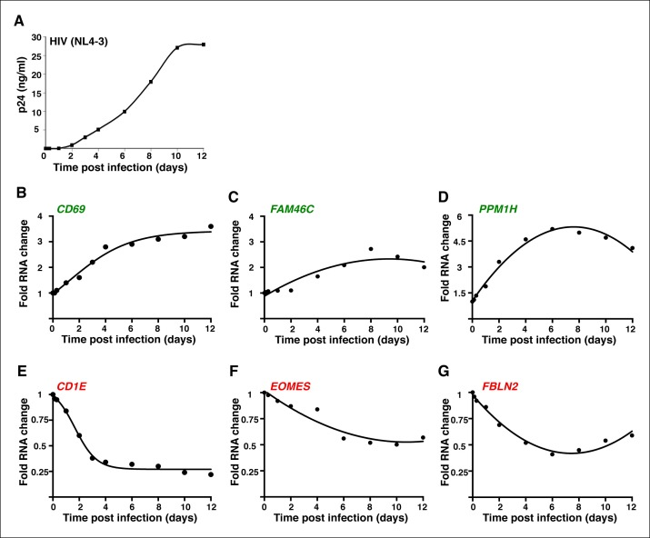 The genes modulated by ectopic expression of Tat are also detected during a time-course HIV infection experiment. ( A ) Jurkat T cells were infected with HIV (NL4-3) and levels of p24/Capsid protein was quantified using ELISA at different time points post-infection (0, 3 and 7 hr; 1, 2, 4, 6, 8, 10, and 12 days). Values represent the average of three independent experiments (mean ± SEM; n = 3). Cells from panel ( A ) were used to isolate total RNA and the expression of three TSG: CD69 ( B ), FAM46C ( C ), and PPM1H ( D ); and three TDG: CD1E ( E ), EOMES ( F ) and FBLN2 ( G ) normalized to RPL19 was measured by qRT-PCR and plotted as fold RNA change over the GFP cell line arbitrarily set at 1 (mean ± SEM; n = 3). The points in the curve were fitted to a non-linear regression in GraphPad Prism. ELISA, enzyme-linked immunosorbent assay; GFP, green fluorescent protein; HIV, human immunodeficiency virus; qRT-PCR, quantitative real time polymerase chain reaction; SEM, standard error of the mean; TSG, Tat stimulated genes; TDG, Tat downregulated genes. DOI: http://dx.doi.org/10.7554/eLife.08955.010