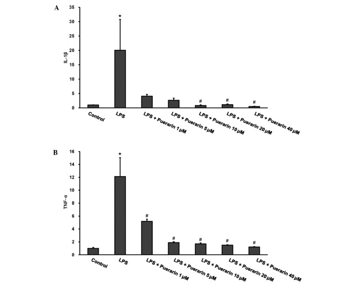 Effect of puerarin on mRNA expression levels of inflammatory mediators (A) IL-1β and (B) TNF-α in H9c2 cardiomyocytes. Puerarin decreased the LPS (1 µg/ml)-induced expression of IL-1β and TNF-α in a concentration-dependent manner. *P