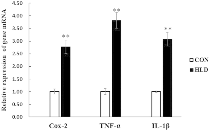 Relative cox-2 , TNFα and IL-1β mRNA levels. Relative cox-2 , TNFα and IL-1β mRNA levels were evaluated by quantitative realtime PCR (qRT-PCR) and expressed relative to β-actin levels in the liver of experimental fish. Results are expressed as means ± S.E.M. (n = 3). * P