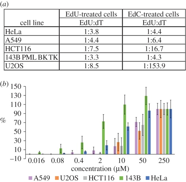EdU- and dT-content ratios and the dependence of EdU incorporation on EdC concentrations. ( a ) The ratio between the content of EdU and dT in isolated DNA after a 24-h incubation with 10 µM EdU or EdC in five cell lines is shown. ( b ) The average nuclear signal in five cell lines incubated with 0.016–250 µM EdC for 4 h. The detection of the signal was performed using a click reaction. The data were normalized to the signal provided by 250 µM EdC (equal to 100%). The data are presented as mean ± s.e.m.
