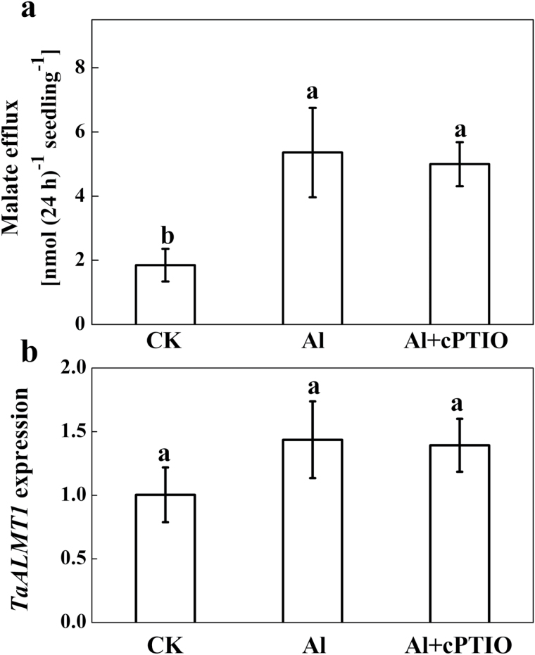 Effect of the NO scavenger cPTIO on Al-induced root malate exudation and TaALMT1 expression in roots. Three-day-old seedlings were exposed to a 30 μM Al solution containing 0 or 30 μM cPTIO for 24h. ( a ) Root exudates were collected after 24h exposure and malate was analysed by HPLC. ( b ) Root apices (0–10mm) were collected. The relative expression of TaALMT1 in 10-mm root apices was determined by qRT-PCR. Means ± SD (n = 3) with different letters are significantly different at P
