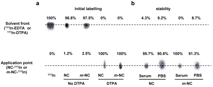 Radio-labelling and in vitro serum stability of NC and m- NC. The NC and m- NC were prepared by single emulsification/solvent evaporation method. PLGA 18KDa -PEG 3.5KDa -DTPA was incorporated in the formulation at 10% (w/w). The radio-labelling reaction was carried out for 30 min in 0.2 M ammonium acetate (pH 5.5) and quenched by the addition of 0.1M EDTA of 1/20 (v/v) of the total volume. a , Radio-labelling efficiency was evaluated immediately after labelling and 100% radio-labelling efficiency was obtained for both types of NCs whereas NCs without incorporation of DTPA showed no radio-labelling. b , Serum stability was tested by incubation of NC- 111 In and m- NC- 111 In in serum or PBS at 37 °C up to 24 h. Both types of NC exhibited high stability in serum and PBS indicated by presence of low amount of 111 In-EDTA.