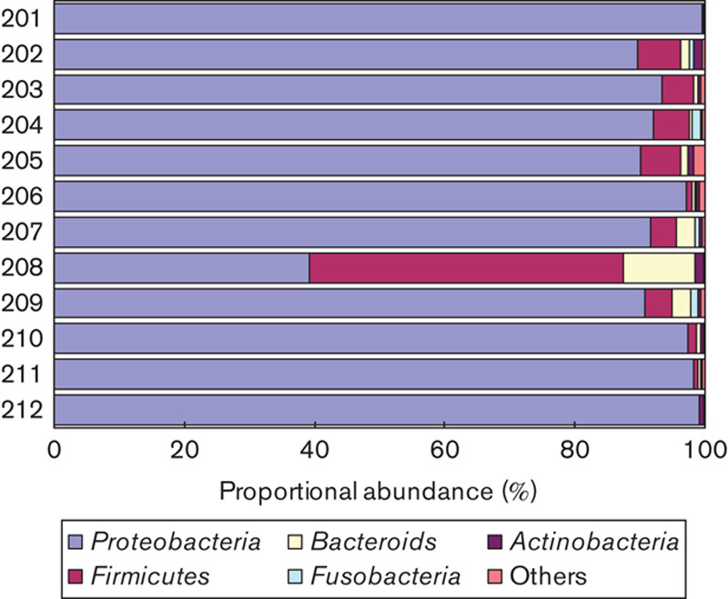 Compositions of gastric microbiota at the phylum level. High-throughput sequencing of amplicons of the 16S rRNA gene was performed on 12 samples from patients with chronic gastritis (201–206) and gastric cancer (207–212).