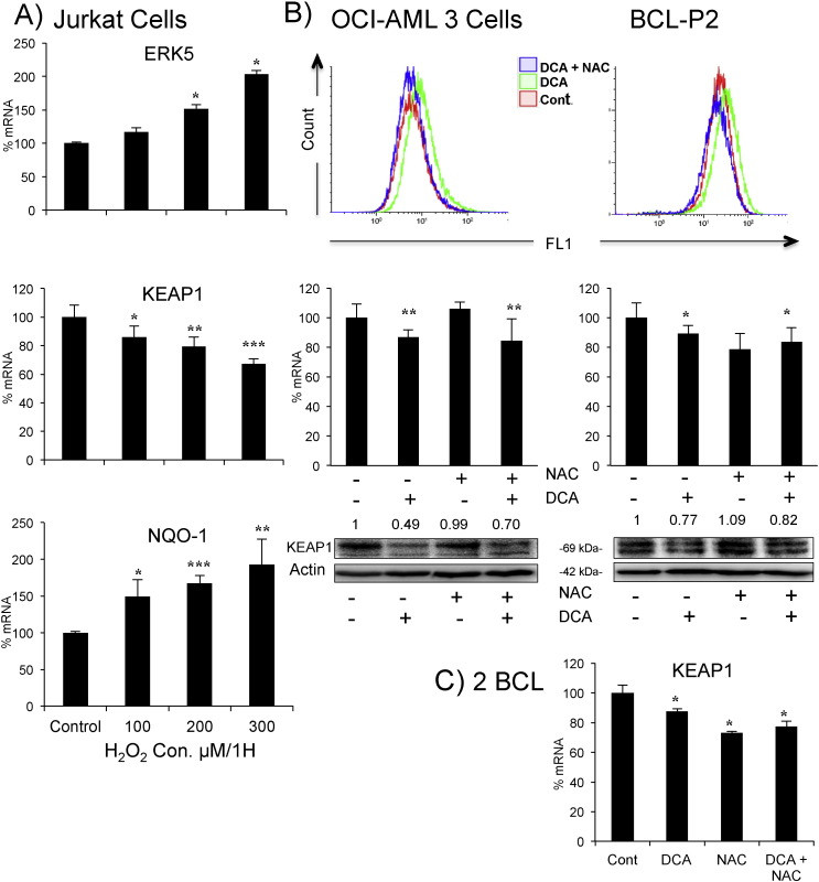 Increase in ROS levels is not essential for KEAP1 downregulation. A) Jurkat cells were treated with increasing concentrations of H 2 O 2 for 1 h and mRNA expression was analyzed. B) OCI-AML3 cells (left) or primary tumor cells from a BCL patient (right) were treated with 1.5 mM NAC 1 h before adding DCA (20 mM) for 24 h. Cells were labeled with CH-H2DCFDA and analyzed by FACs for ROS production. Keap1 mRNA and protein were analyzed as described in Fig. 2 . C) Primary tumor cells from 2 BCL patients were treated as in (B) before analyzing KEAP1 mRNA expression, results represent the means ± SD of these two patients in triplicate. The data represent means ± SD; *p