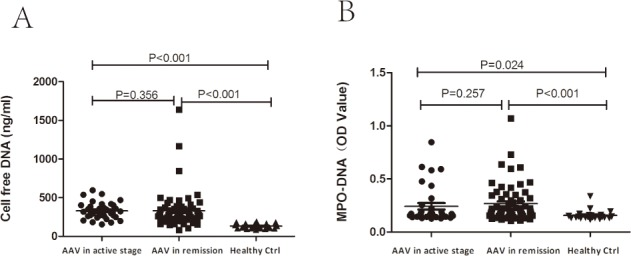 Serum levels of NETs in AAV patients in active stage and remission. A. Quantification of cell free <t>DNA</t> using Quant-iT <t>PicoGreen</t> assay in serum samples from healthy donors (n = 22), individuals with AAV in remission (n = 62) and with active disease (n = 34). B. Quantification of NETs in the serum samples by MPO-DNA complex ELISA. The mean optical density as measured by capture ELISA.