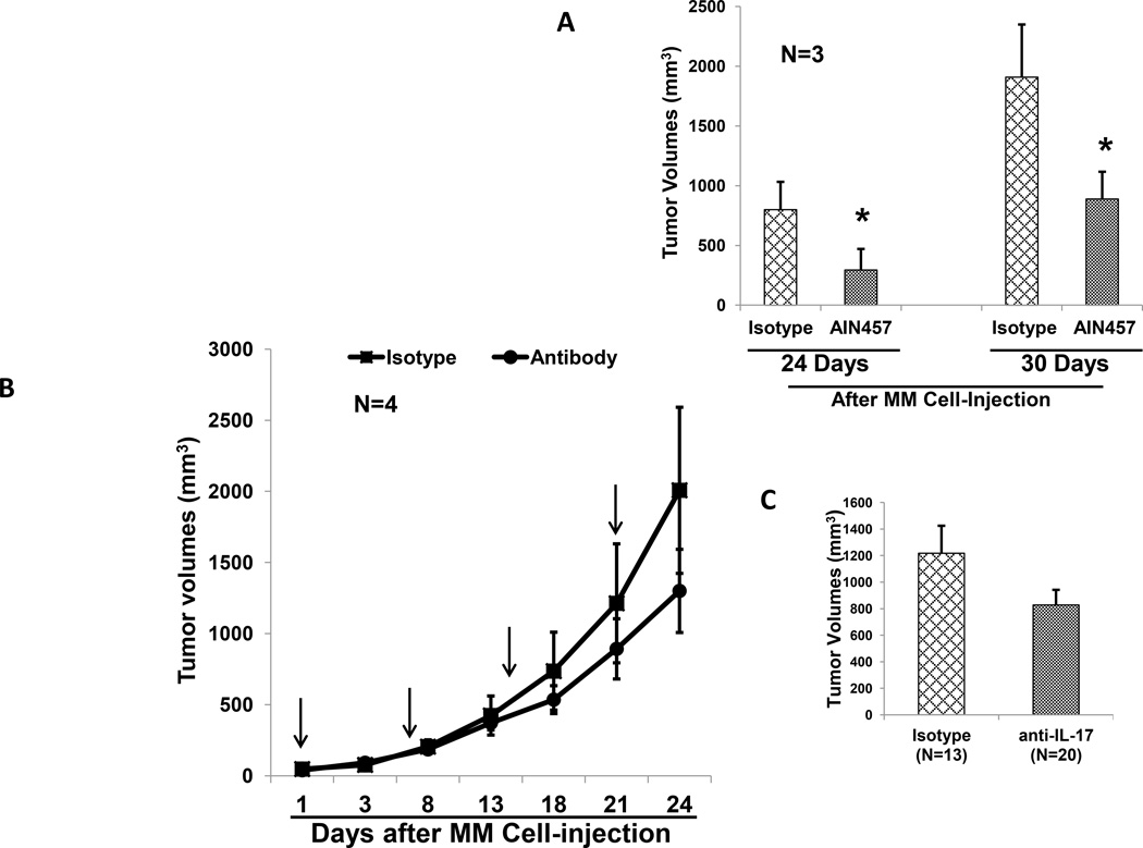 Effect of AIN-457 humanized antibody on myeloma growth using three mouse models without tumor microenvironment (A) SCID mice were injected with myeloma cells by sc route. Mice were injected in 2 groups (N=3). One group was injected with myeloma cells with isotype control antibody; and second of mice injected with MM cells in anti-IL-17A mAb (10µg/ml). Tumor volume was measured at indicated time intervals from the MM cell-injections. Representative of two experiments is shown (p