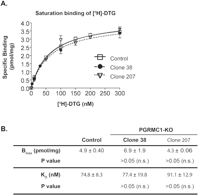 Eliminating PGRMC1 protein does not alter [ 3 H]-DTG binding to the S2R in cell membranes. A. A representative of [ 3 H]-DTG saturation binding in membranes prepared from control and PGRMC1 knockout (clones 38 and 207) NSC34 cells, (+)-pentazocine (100 nM) was included to mask [ 3 H]-DTG binding to the S1R such that [ 3 H]-DTG would be bound only to the S2R and measured as specific S2R binding. Nonspecific binding was measured (by adding haloperidol) and subtracted. Control refers to the NSC34 cells transfected with the control vector for the expression of Cas9 but not an sgRNA. B. Statistics. Maximum binding (B max ) and equilibrium dissociation constants (K D ) for [ 3 H]-DTG were calculated using a Prizm software and reported as mean ± SEM of three separate experiments each performed in triplicates. Not significant (n.s.).
