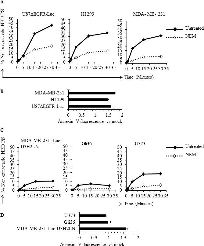 Inhibition of flippase activity by NEM reveals involvement of flippase activity in the regulation of surface PS A . Low surface PS cells were either treated with NEM or left untreated, incubated with NBD-PS for indicated time periods and subjected to BSA extraction and sodium dithionite treatment. % nonextractable NBD-PS (after BSA extraction and sodium dithionite treatment) represents internalized NBD-PS, indicative of flippase activity B . Flippase activity was inhibited by use of NEM in low surface PS cell lines and surface PS levels were measured by annexin V FITC binding assay, by flow cytometry. The graph shows annexin V FITC fold change compared to mock treated cells. C . High surface PS cells were either treated with NEM or left untreated and incubated with NBD-PS for indicated time periods and subjected to BSA extraction and sodium dithionite treatment. % nonextractable NBD-PS (after BSA extraction and sodium dithionite treatment) represents internalized NBD-PS, indicative of flippase activity D . Flippase activity was inhibited by use of NEM in the high surface PS cell lines and surface PS levels were measured by annexin V FITC binding assay by flow cytometry. The graph shows annexin V FITC fold change compared to mock treated cells.