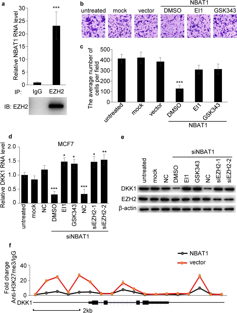 NBAT1 inhibits invasion of breast cancer cells via EZH2 a . Binding of NBAT1 to EZH2 complex in MDA-MB-231 cells, shown by RNA immunoprecipitation followed qRT-PCR (mean±SD, n=3, *** p