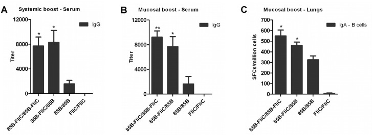 Flagellin enhanced anti-Ag85B antibody responses following either systemic or mucosal prime-boost immunization. Mice were primed twice with DNA vaccine via the IM route and boosted either IM or IN with Ad vaccine three weeks later as shown in Table 1 . Sera were collected and tested by ELISA for anti-Ag85B IgG antibodies at week 3 post systemic (A) or mucosal (B) boosting. Data shown are means of endpoint antibody titers ± SEM per group. (C) Lungs were harvested from IN-boosted mice at week 14 post-boosting and tested for mucosal IgA-secreting B cells by ELISpot. Data shown are mean of SFCs ± SEM per group. (* p