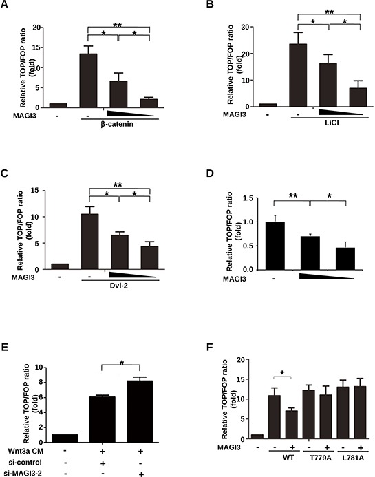 MAGI3 inhibits β-catenin transcriptional activity A. HEK293 cells were co-transfected with plasmids coding for β-catenin (0.2 μg), increasing amounts of GFP-MAGI3 (0, 0.1 or 0.2 μg), Renilla (0.01 μg) and either the TOP or FOP luciferase reporter (0.1 μg each). B. HEK293 cells were co-transfected with increasing amounts of GFP-MAGI3 (0, 0.2 or 0.4 μg) and luciferase reporter plasmids followed by treatment with 30 mM LiCl for 24 h. C. HEK293 cells were co-transfected with Dvl-2 (0.2 μg), increasing amounts of GFP-MAGI3 (0, 0.1 and 0.2 μg) and luciferase reporter plasmids. D. HEK293 cells were co-transfected with increasing amounts of GFP-MAGI3 (0, 0.2 and 0.4 μg) and luciferase reporter plasmids. E. HEK293 cells were co-transfected with luciferase reporter plasmids and either MAGI3 siRNA or scrambled siRNA control (50 nM each) followed by 8 h of stimulation with Wnt3a CM. F. HEK293 cells were co-transfected with GFP-MAGI3 (0.1 μg) and either wild-type β-catenin (WT) or its mutants (T779A, L781A, 0.2 μg each) plus luciferase reporter plasmids. For all transfections, the total amount of DNA was adjusted to 0.5 μg with the empty vector in (A–D) and (F) The reporter activities were determined 48 h after transfection. Values are expressed relative to the ratio of TOP/Renilla versus FOP/Renilla firefly luciferase activity in HEK293 cells transfected with empty vector. Data are expressed as the mean ± SD of triplicate samples. * P
