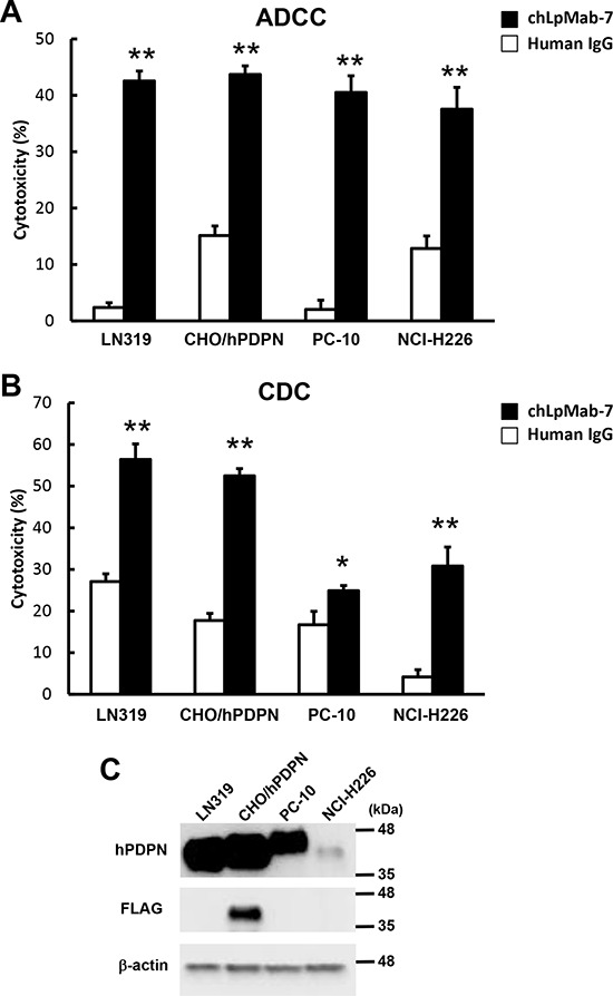 ADCC and CDC activities of chLpMab-7 A. ADCC activities induced by human MNC against hPDPN-expressing cell lines were determined using a 6 h 51 Cr release assay at the E/T ratio of 100 in the presence of 1 μg/ml chLpMab-7 and human IgG. B. CDC activities against hPDPN-expressing cell lines were demonstrated by 51 Cr release assay. * P