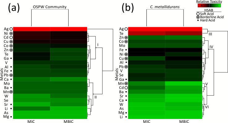 Heat map analysis of relative metal toxicity to (a) the OSPW consortia and (B) C . metallidurans . The heat map colors represent average minimum inhibitory concentrations (MIC) and minimum biofilm inhibitory concentrations (MBIC) based on average values obtained from two to nine trials, where red reflects the most toxic metals and green represents the least toxic. The Hard Soft Acid Base (HSAB) designation describes the behaviour of metal ions based on preferential donor ligands. Soft acids prefer to bind with thiol (S-group) ligands, hard acids with N and O, and borderline acids have varied preference for S, N, and O-containing ligands.