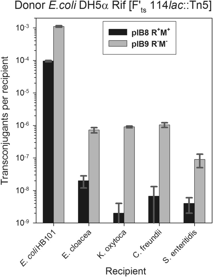 The effect of the presence of EcoVIII RM system in recipient cells on efficiency of conjugal transfer of plasmid F. E . coli DH5α Rif [F' ts 114 lac ::Tn 5 , Km R ] was used as donor. The following recipient bacteria were assayed: Escherichia coli HB101, Enterobacter cloacae , Klebsiella oxytoca , Citrobacter freundii , and Salmonella enteritidis that carried either pEC156-derivative pIB8 (EcoVIII R + M + , black bars) or pIB9 (EcoVIII R − M − , grey bars). Each column represents the mean value (± standard deviation) from three repeats. Statistical analysis revealed correlation between presence of a plasmid with RM system in the recipient bacteria and frequency of F plasmid conjugal transfer ( P
